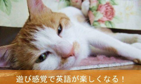 sleepy-cat