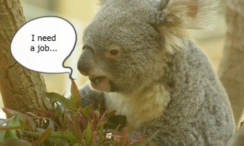 lazy-koala